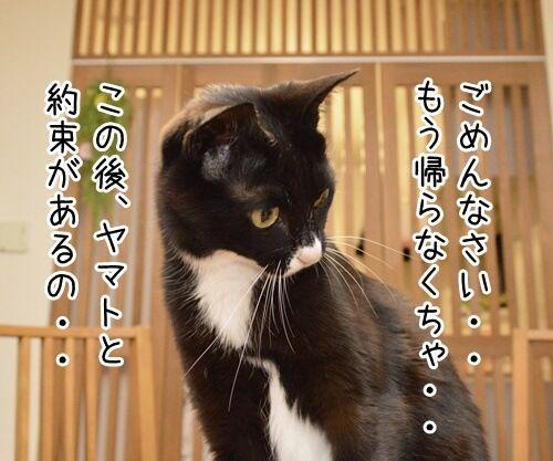 この後… どうする…? 猫の写真で4コマ漫画 2コマ目ッ