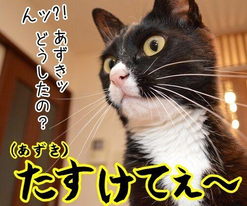 ルールルルルッルー 今日もいい天気~ 猫の写真で4コマ漫画 1コマ目ッ