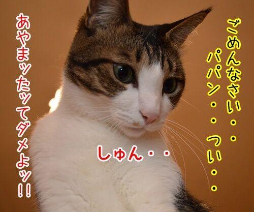 悪いコは… 猫の写真で4コマ漫画 2コマ目ッ