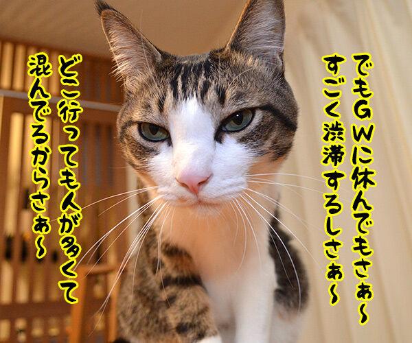 ゴールデンウイークに休んでもさぁ~ 猫の写真で4コマ漫画 2コマ目ッ