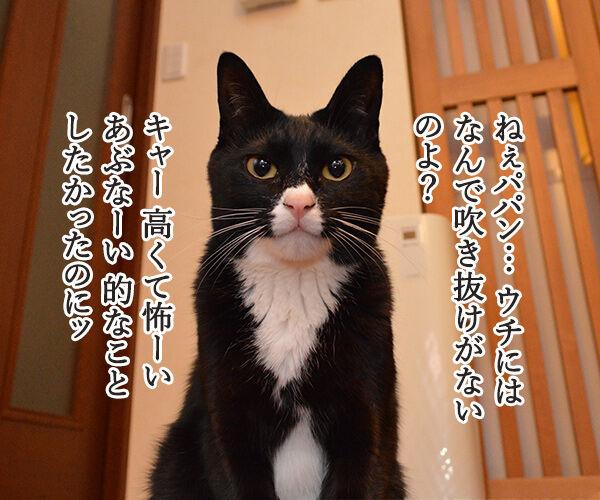 なんということでしょう? 猫の写真で4コマ漫画 1コマ目ッ