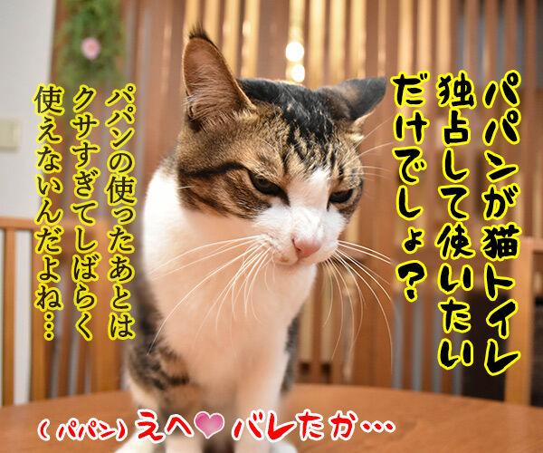 ヒト用のトイレを使えるようにってみない? 猫の写真で4コマ漫画 4コマ目ッ