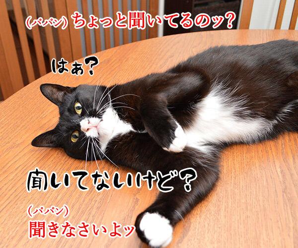 パパンのお説教 猫の写真で4コマ漫画 3コマ目ッ