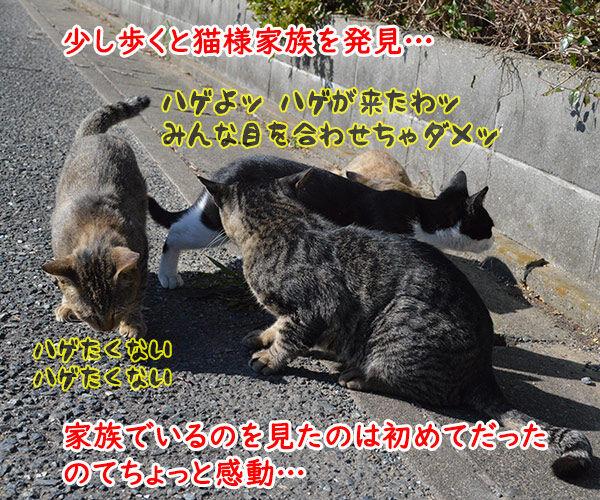 猫島 其の一 猫の写真で4コマ漫画 2コマ目ッ