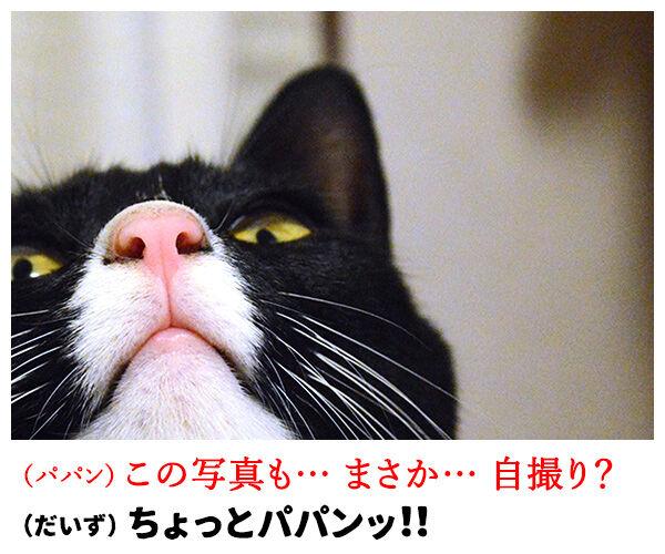 自撮り 猫の写真で4コマ漫画 3コマ目ッ