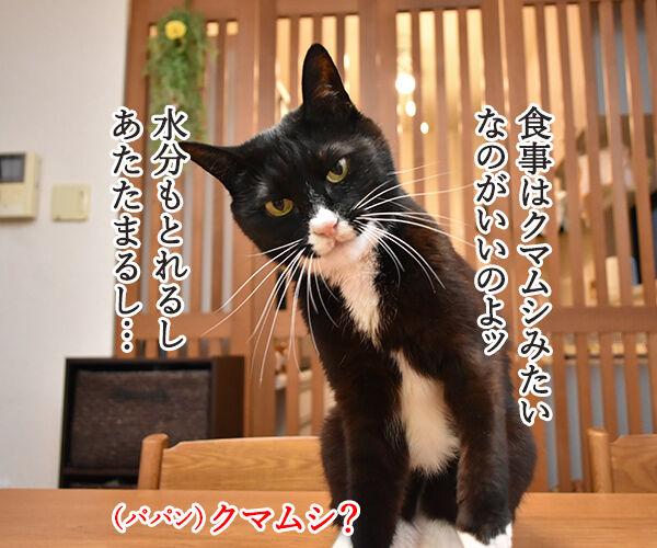 猫さんは寒くてお水飲まないと下部尿路疾患になっちゃうのよッ 猫の写真で4コマ漫画 3コマ目ッ