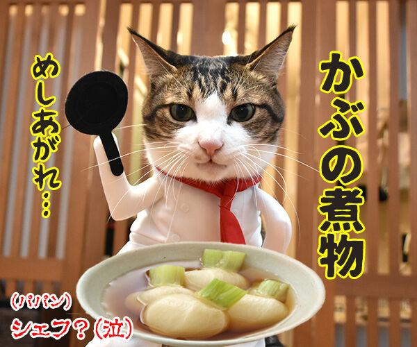 今までにした『かぶりもの』を集めてみたよッ 猫の写真で4コマ漫画 9コマ目ッ