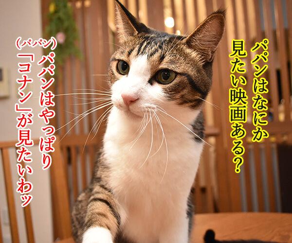 ゴールデンウィークは映画を見ようッ 猫の写真で4コマ漫画 2コマ目ッ