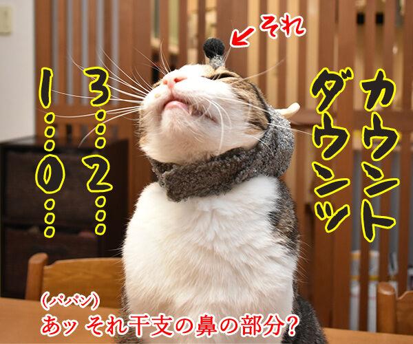 今年の干支を発表しますッ 猫の写真で4コマ漫画 2コマ目ッ