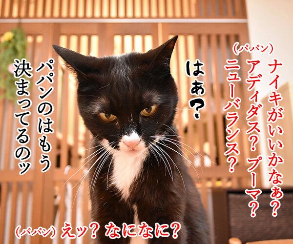 スニーカーを買い替えようと思うのッ 猫の写真で4コマ漫画 3コマ目ッ