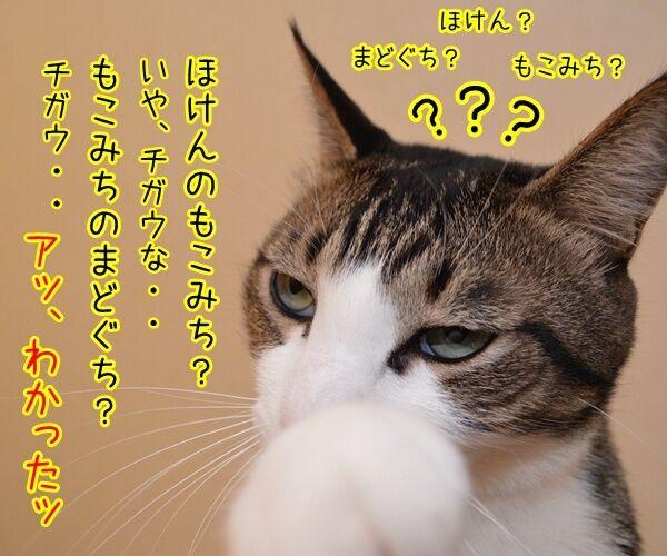 保険に入ろうと思って…… 猫の写真で4コマ漫画 3コマ目ッ