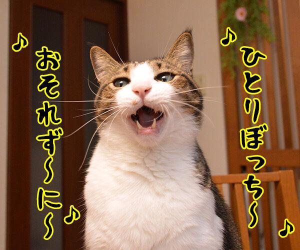 耳をすませば カントリーロード 猫の写真で4コマ漫画 1コマ目ッ
