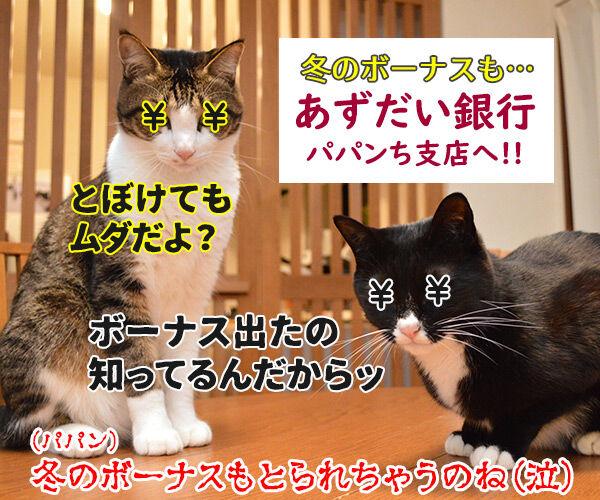 今日はジョン・レノンさんが亡くなられた日なんですってッ 猫の写真で4コマ漫画 4コマ目ッ