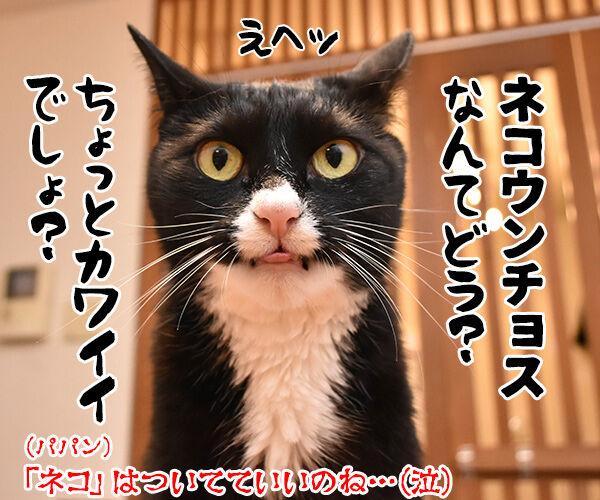 小学校教諭がガソリンスタンドで5000円をネコババですってッ 猫の写真で4コマ漫画 4コマ目ッ