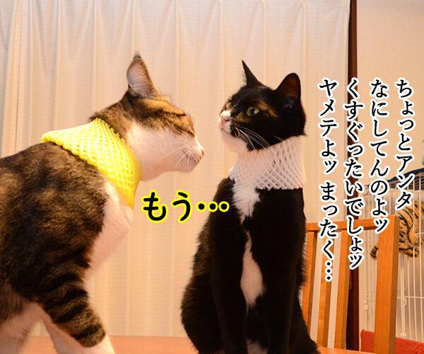 ラブストーリーは突然に 猫の写真で4コマ漫画 3コマ目ッ