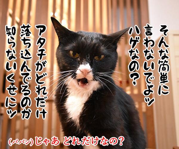 だいずさんが落ち込んでるのッ 猫の写真で4コマ漫画 3コマ目ッ