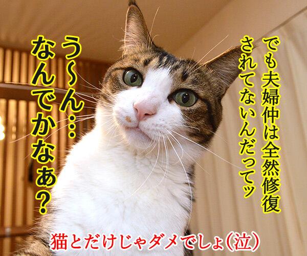 ペットを飼うのは夫婦円満の秘訣よね 猫の写真で4コマ漫画 4コマ目ッ
