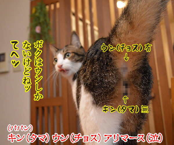 年末ジャンボは明日が抽選日なのッ 猫の写真で4コマ漫画 4コマ目ッ