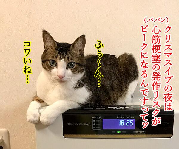 イブの夜10時は心筋梗塞の発作ピークなんですってッ 猫の写真で4コマ漫画 1コマ目ッ