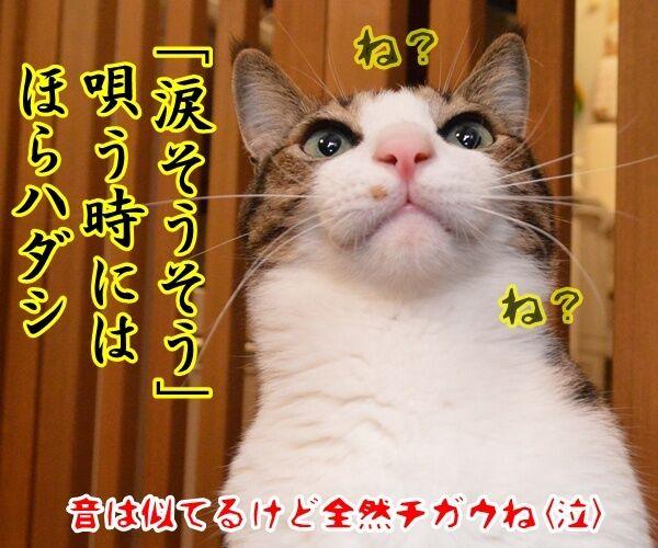 親孝行したい時には…… 猫の写真で4コマ漫画 4コマ目ッ