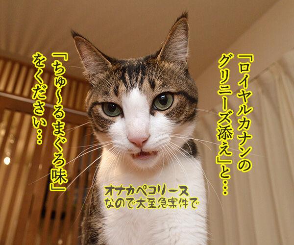 アルバイト初日(だいず篇) 其の一 猫の写真で4コマ漫画 3コマ目ッ