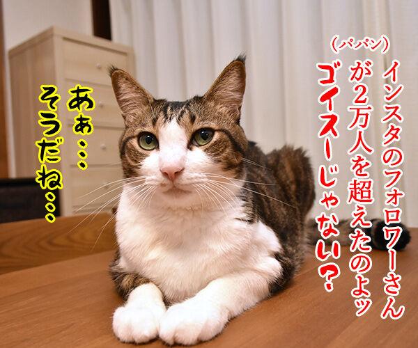 インスタグラムのフォロワーさんが2万人を超えたのよッ 猫の写真で4コマ漫画 1コマ目ッ