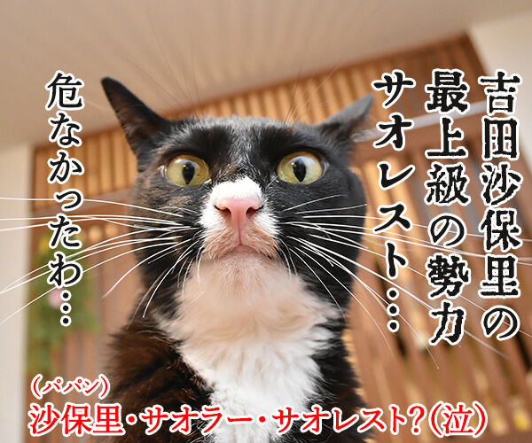 台風22号も強かったわね… 猫の写真で4コマ漫画 4コマ目ッ