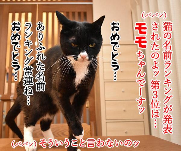猫の名前ランキング大調査2019 結果発表! 猫の写真で4コマ漫画 1コマ目ッ