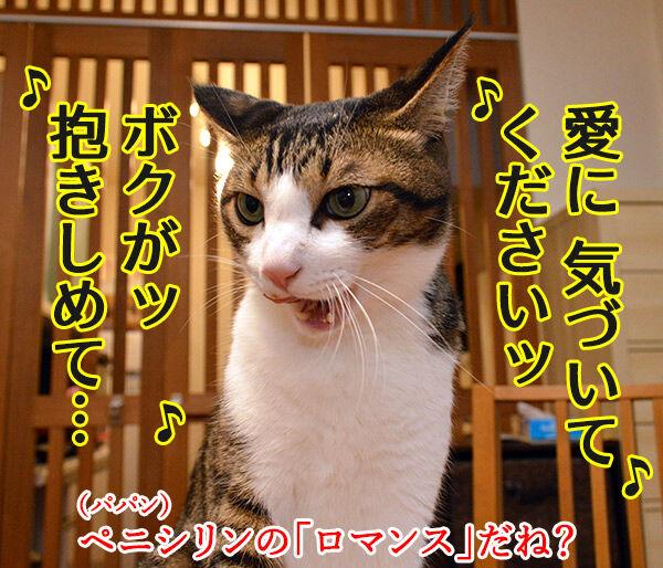 愛しくてハグしたいのよッ 猫の写真で4コマ漫画 3コマ目ッ