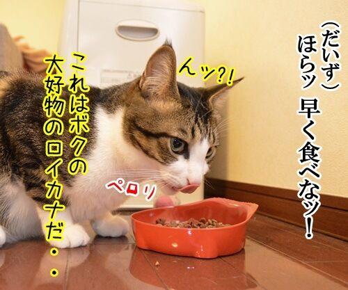 母ちゃんカフェ 猫の写真で4コマ漫画 3コマ目ッ