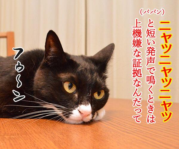 鳴き声でわかる猫のきもち 猫の写真で4コマ漫画 1コマ目ッ