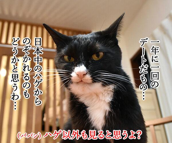 七夕なのにあいにくの雨なの… 猫の写真で4コマ漫画 3コマ目ッ