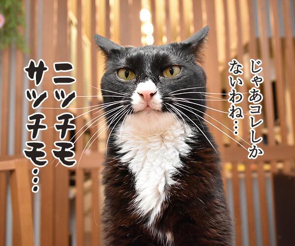 ニッチモサッチモ 猫の写真で4コマ漫画 3コマ目ッ