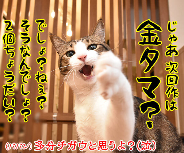 漫画「銀魂」が最終回まで残り5話なんですってッ 猫の写真で4コマ漫画 4コマ目ッ