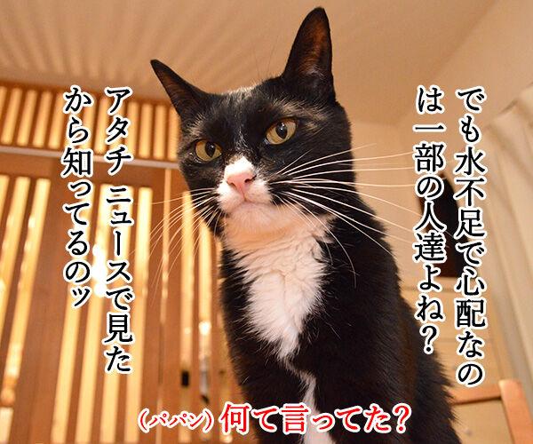 関東甲信地方は梅雨明けなんですってッ 猫の写真で4コマ漫画 3コマ目ッ