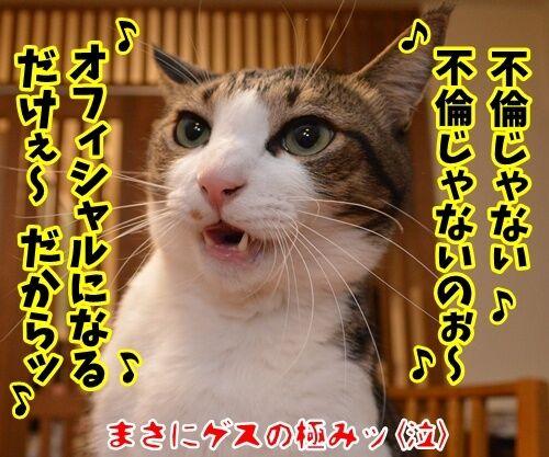 ライブハウス パパンちにようこそッ 猫の写真で4コマ漫画 4コマ目ッ