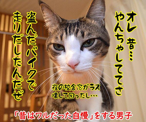 自慢する男子とそれを聞く女子 猫の写真で4コマ漫画 1コマ目ッ