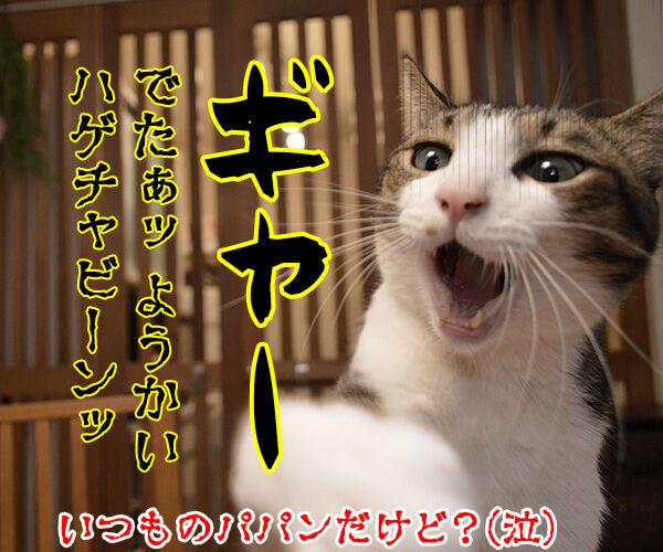 パパンちの怪談 猫の写真で4コマ漫画 4コマ目ッ
