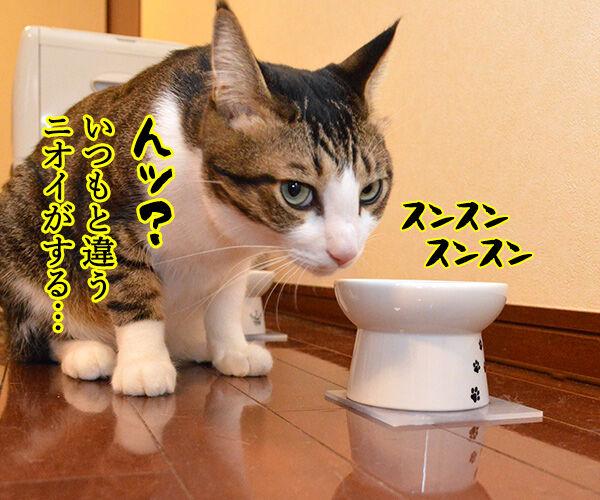 今日はバレンタインデーだから… 猫の写真で4コマ漫画 2コマ目ッ