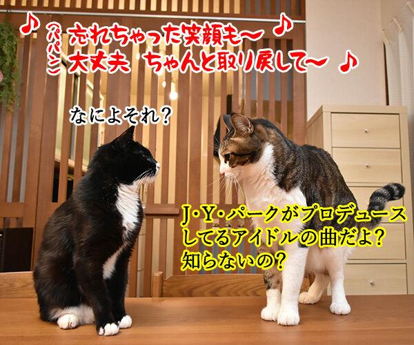 NiziUの『Make you happy』を唄うのよッ 猫の写真で4コマ漫画 2コマ目ッ