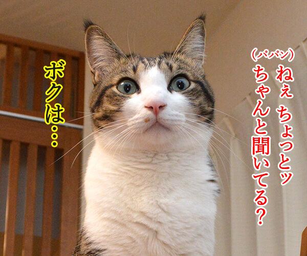 パパンの説教 其の二 猫の写真で4コマ漫画 3コマ目ッ