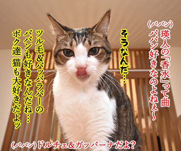 瑛人の「香水」って曲は猫さんも大好きなんですってッ 猫の写真で4コマ漫画 1コマ目ッ