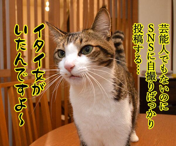 イタい女がいたんですよぉ~ 猫の写真で4コマ漫画 1コマ目ッ