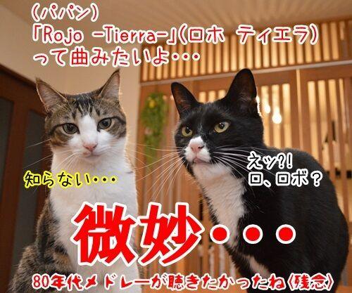 中森明菜さん紅白出場 猫の写真で4コマ漫画 4コマ目ッ