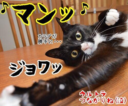ウルトラソウル 猫の写真で4コマ漫画 4コマ目ッ