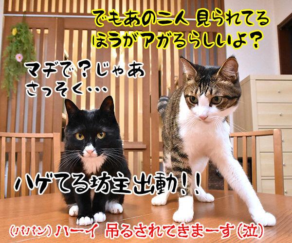 七夕なのにあいにくの雨なの… 猫の写真で4コマ漫画 4コマ目ッ