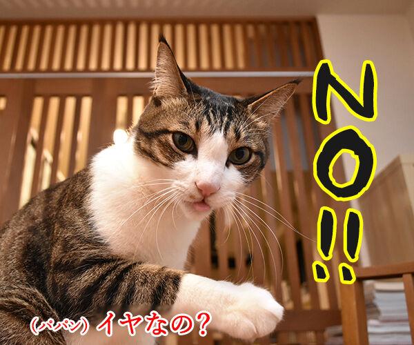 ひさしぶりにおフロに入りましょうか? 猫の写真で4コマ漫画 2コマ目ッ