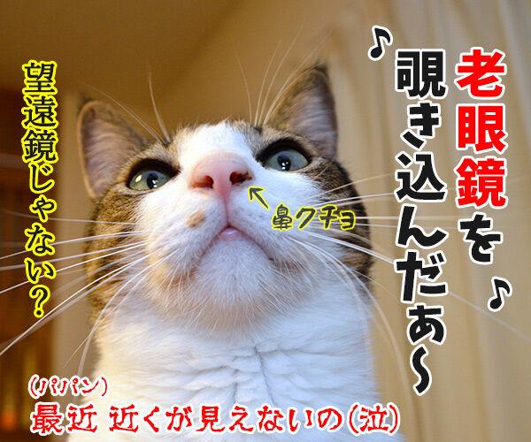 天体観測 猫の写真で4コマ漫画 4コマ目ッ
