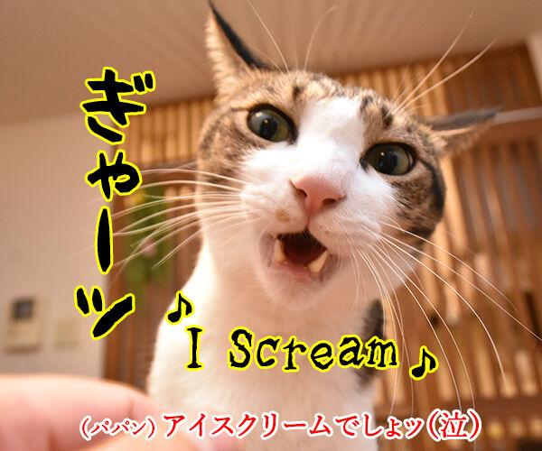 『夏のお嬢さん』はチュウ チュウチュチュなのッ 猫の写真で4コマ漫画 4コマ目ッ