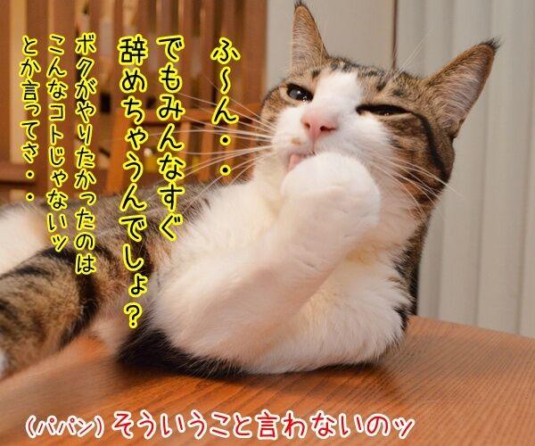 新入社員っていいよね 猫の写真で4コマ漫画 2コマ目ッ